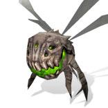 desert_bug